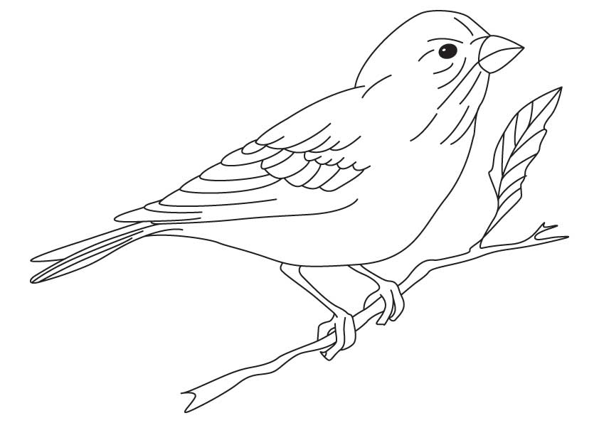 finch coloring page yellow finch coloring pages download and print for free