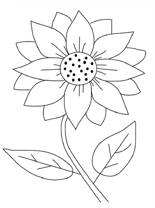 sunflower coloring pages to download and print for free - Sunflower Coloring Pages Kids