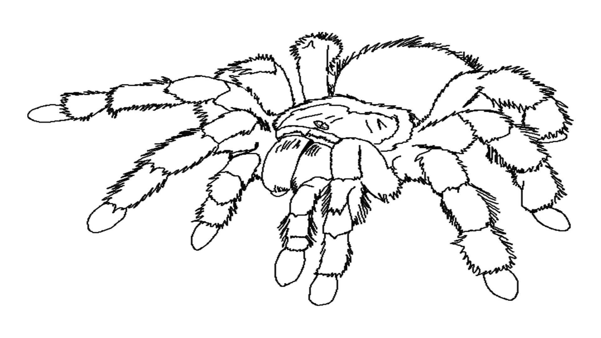 spider coloring pages to download and print for free - Spider Coloring Book