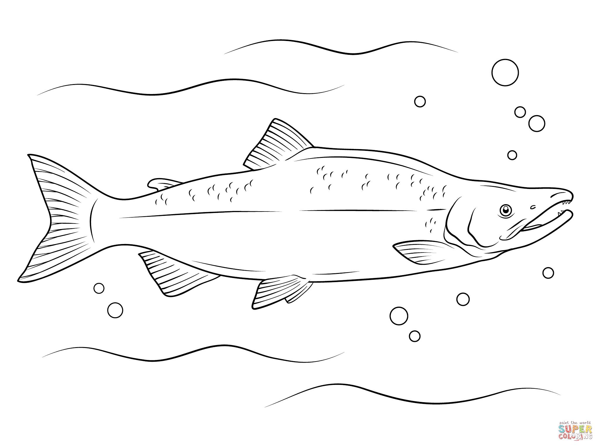 Salmon Coloring Page Printable