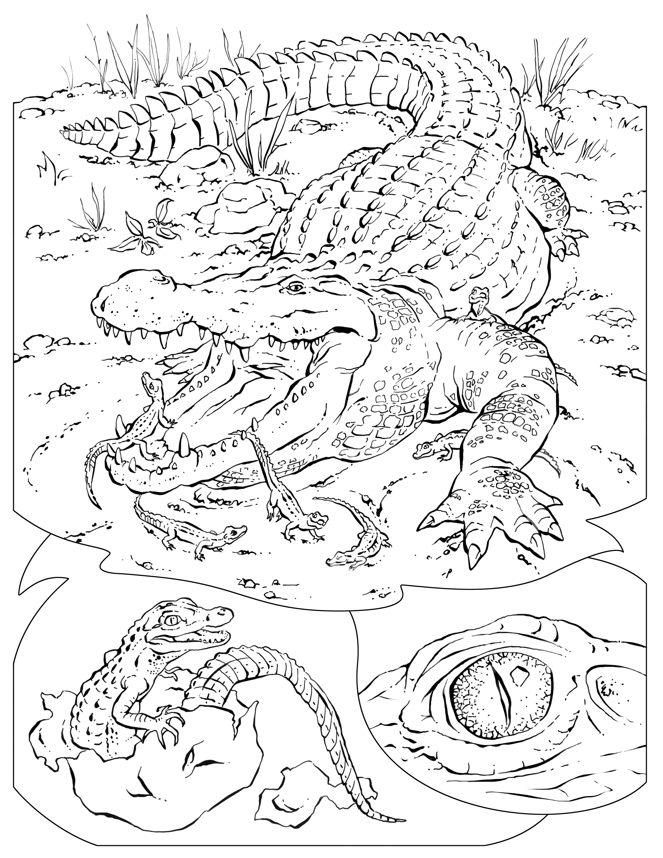 Wildlife coloring pages to download and print for free