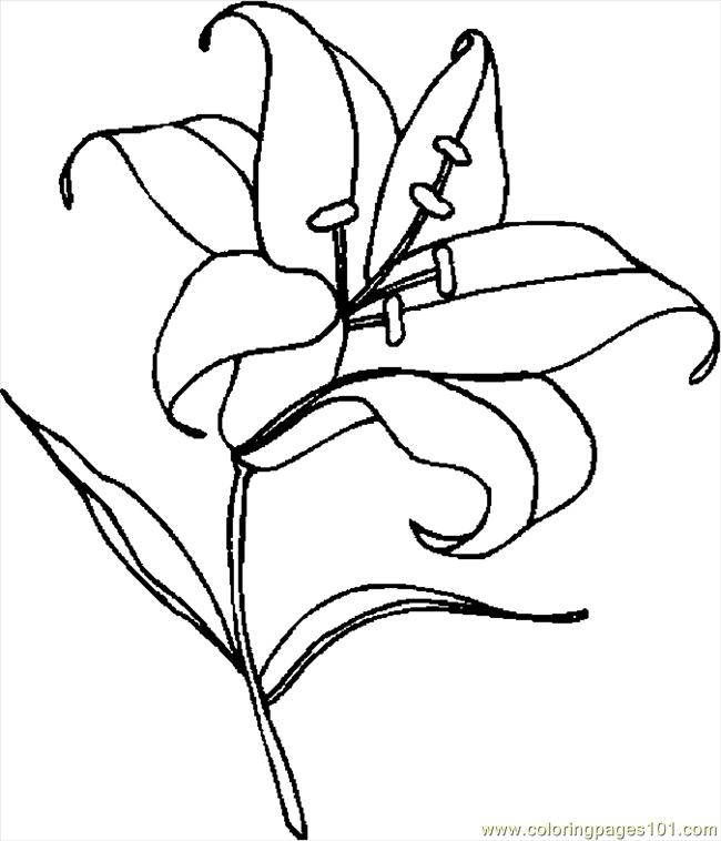 printable coloring pages lily - photo#11