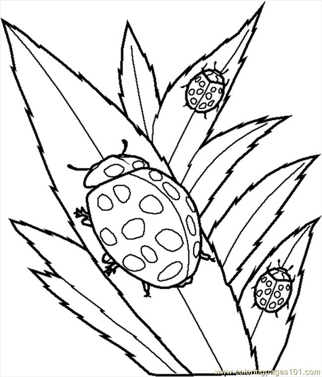 Insect coloring pages to download and print for free