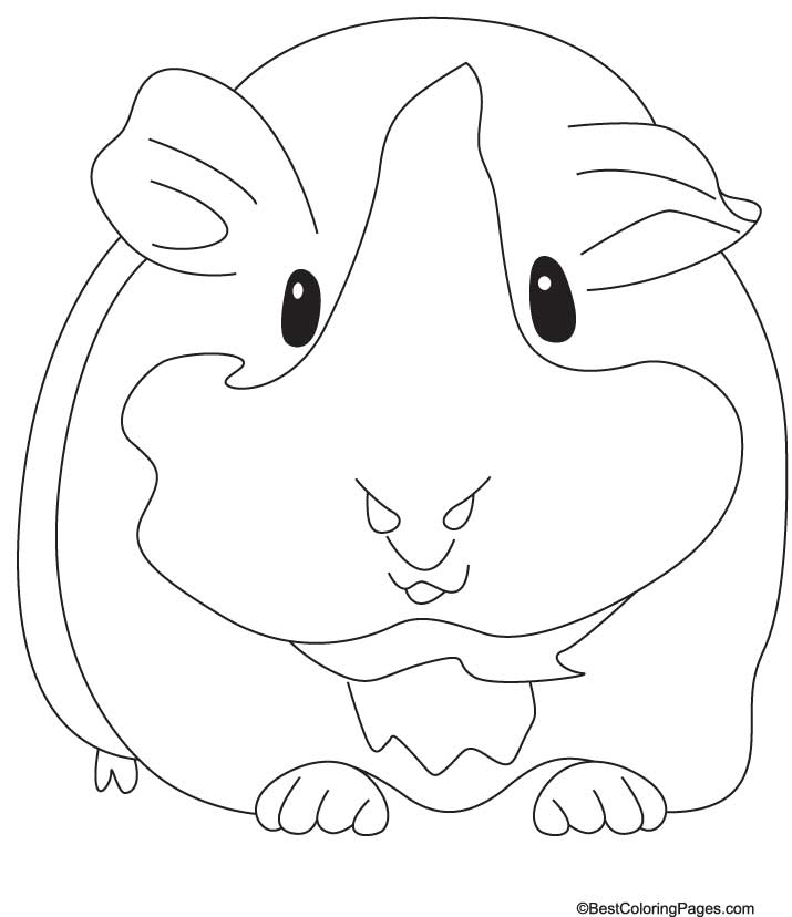 Coloring pages of a guinea pig ~ Guinea pig coloring pages to download and print for free