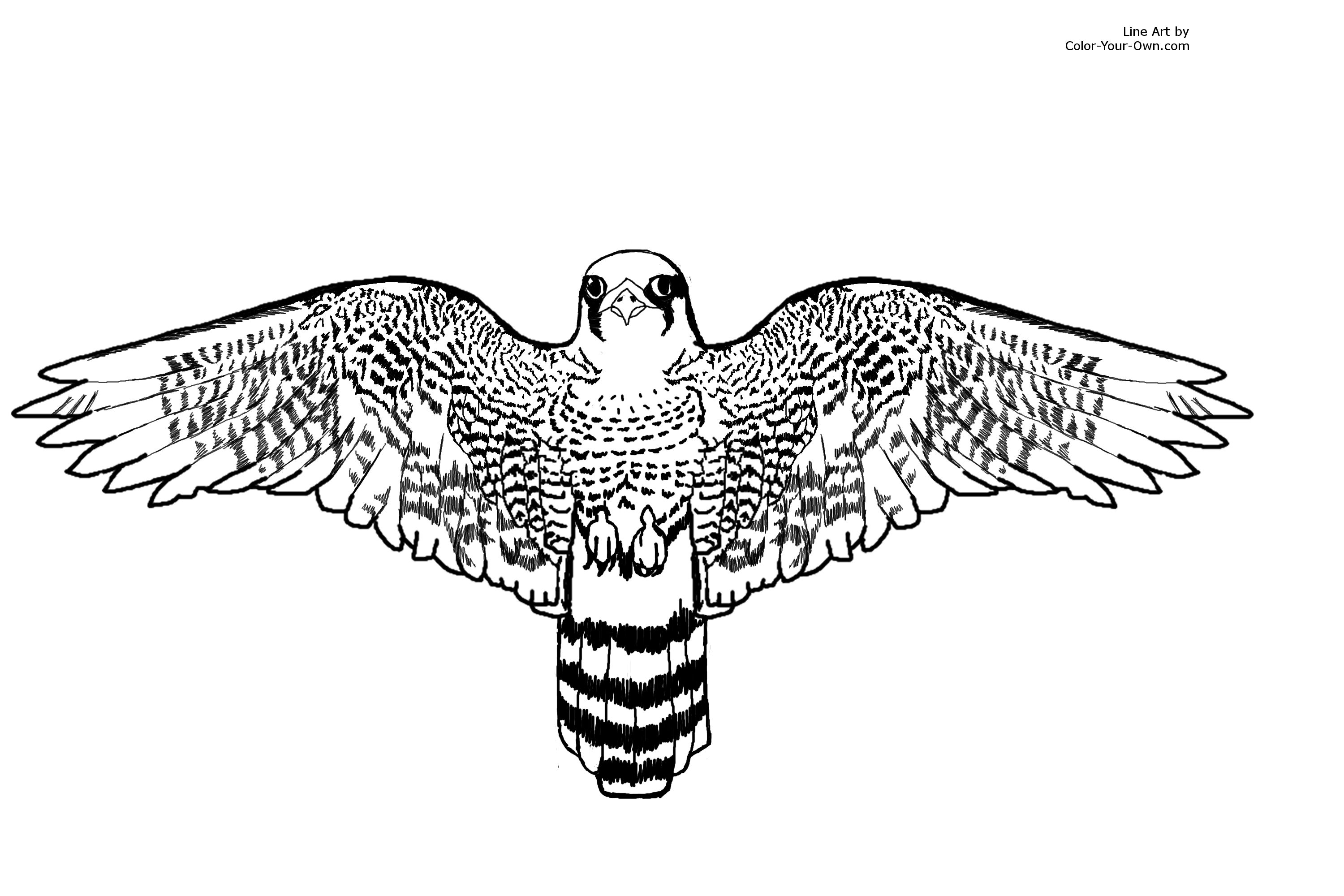 falcon coloring pages - photo#3