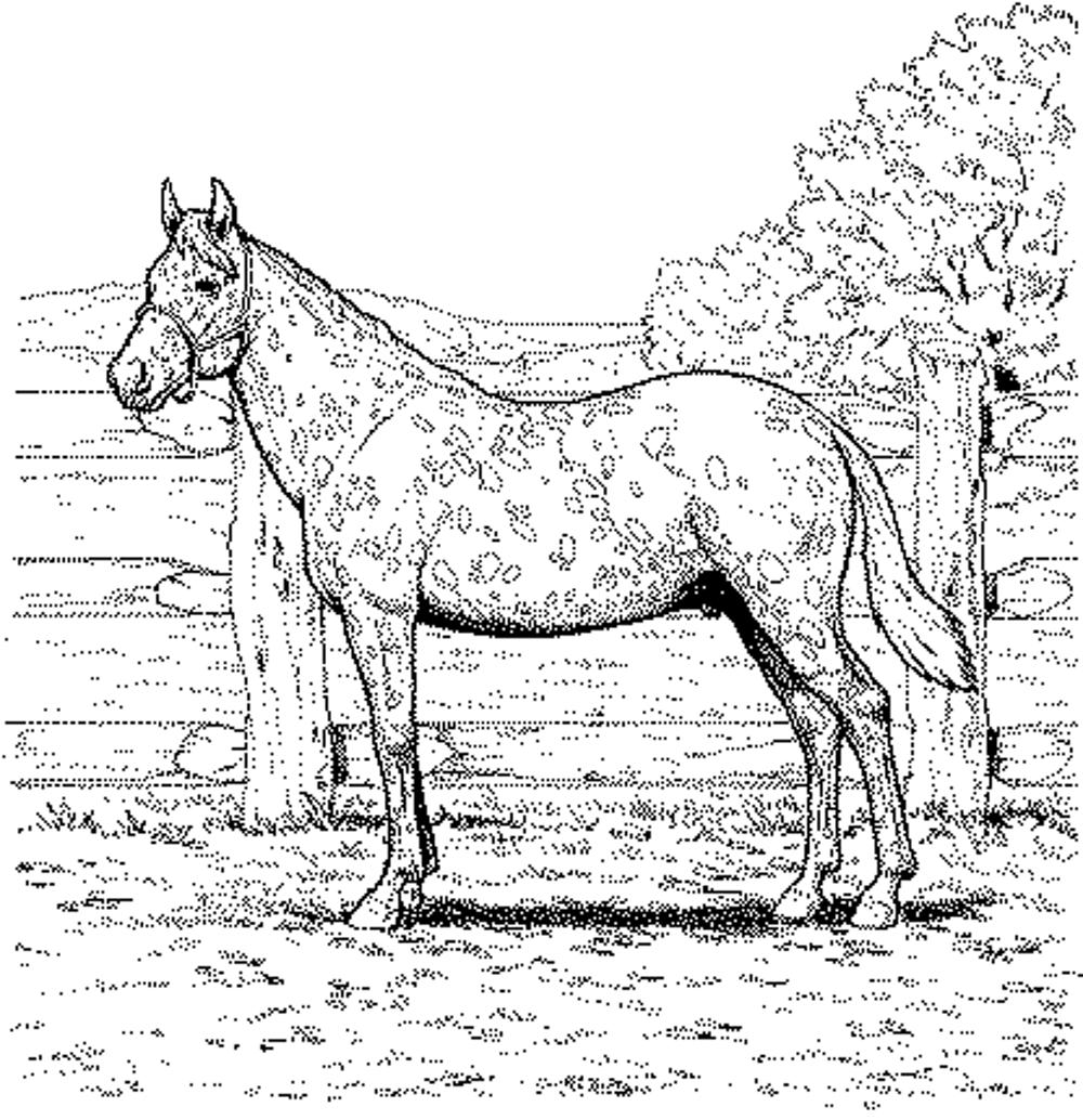 It is a picture of Persnickety Horse Coloring Pages Realistic