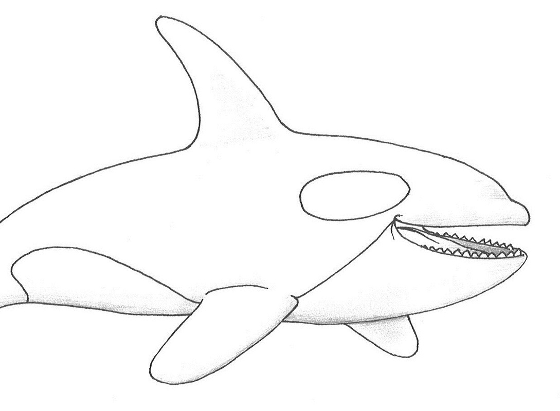 Killer whale coloring pages to