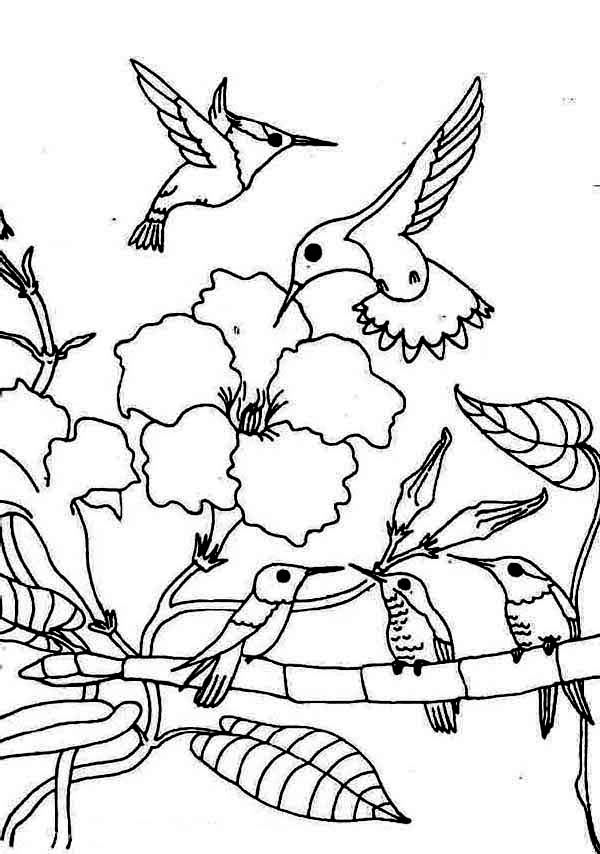 Hummingbird coloring pages to download