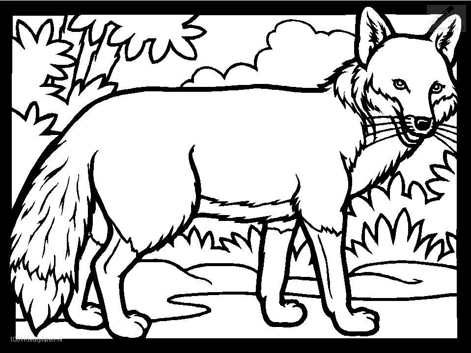 Fox coloring pages to download