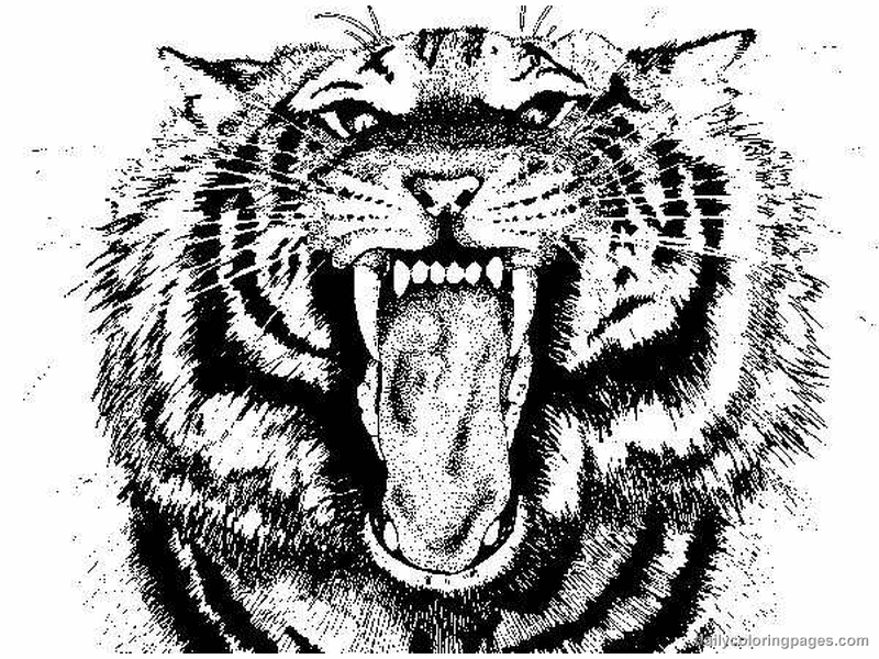 Tiger coloring pages to download