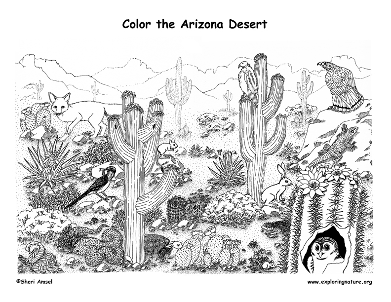 free desert coloring pages - photo#12