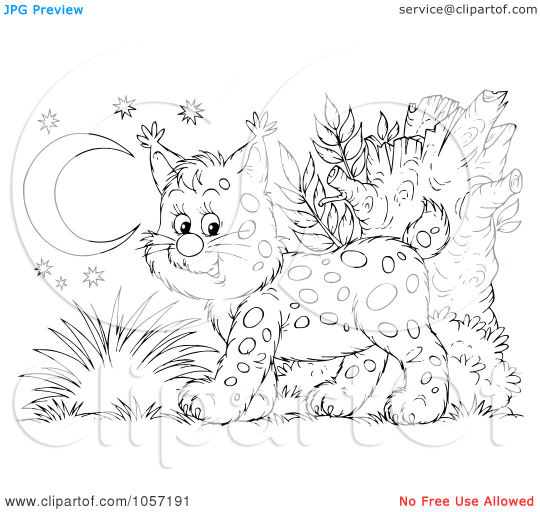 baby lynx coloring pages - photo#24