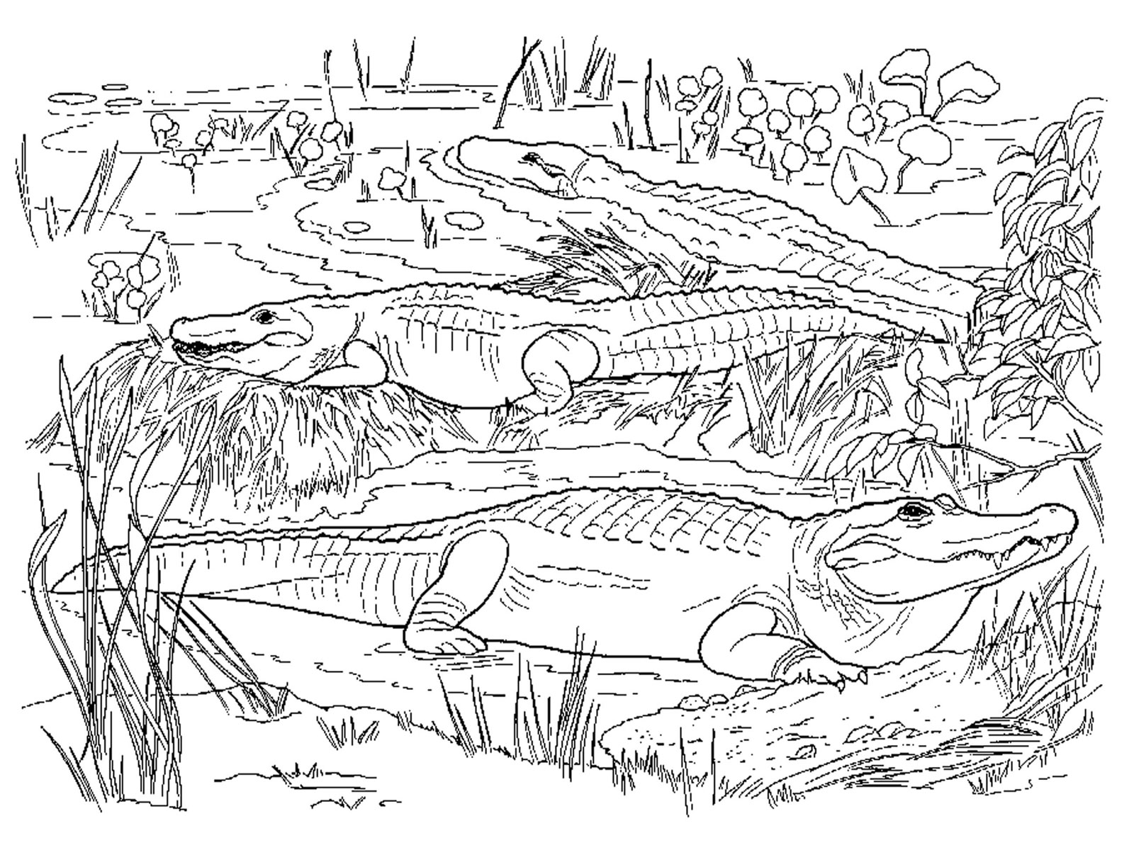 Clip Art Killer Croc Coloring Pages crocodile coloring page eassume com alligators and crocodiles pages download print for free