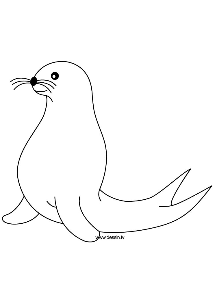 Seal Coloring Pages Download And Print For Free