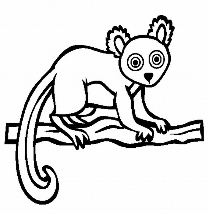 wonderful sloth rainforest animals coloring pages with jungle