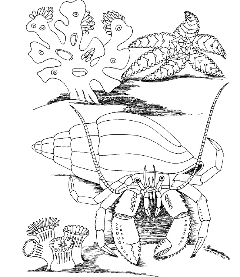Underwater coloring pages to download