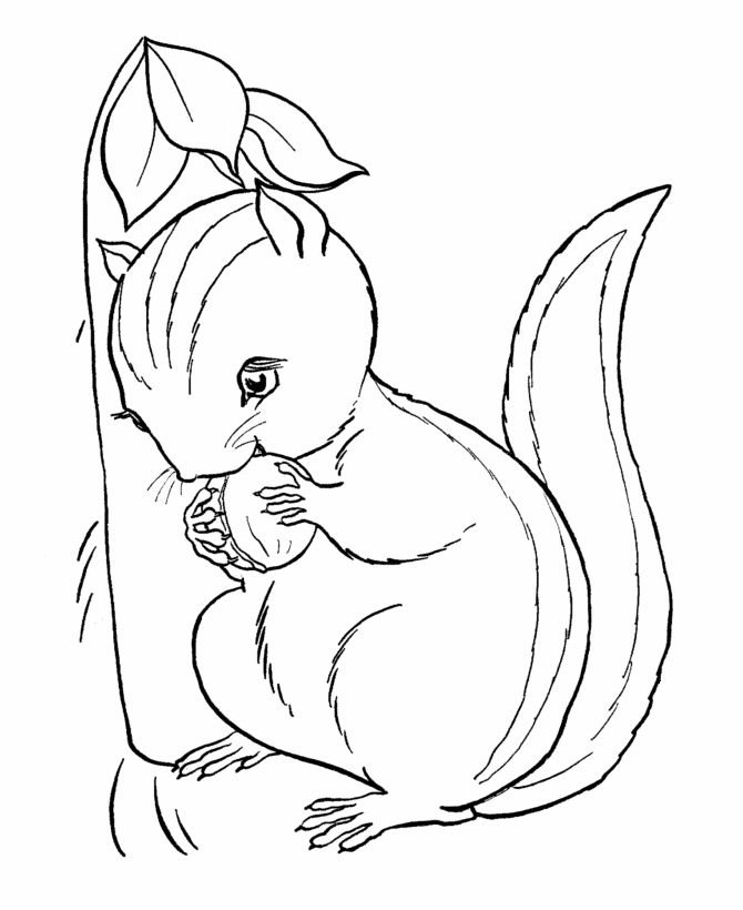 Chipmunk Coloring Pages To Download And Print For Free