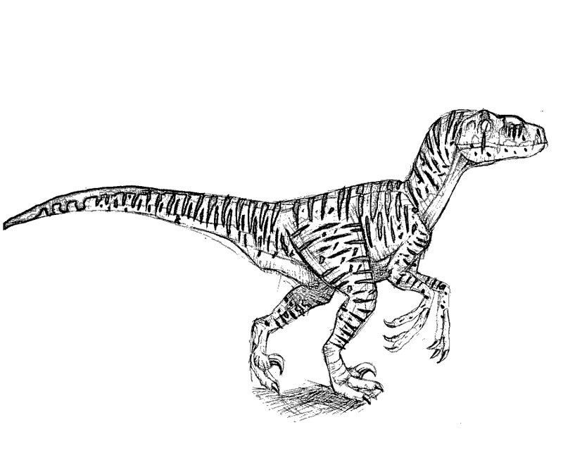 This is a photo of Decisive jurassic world velociraptor coloring pages