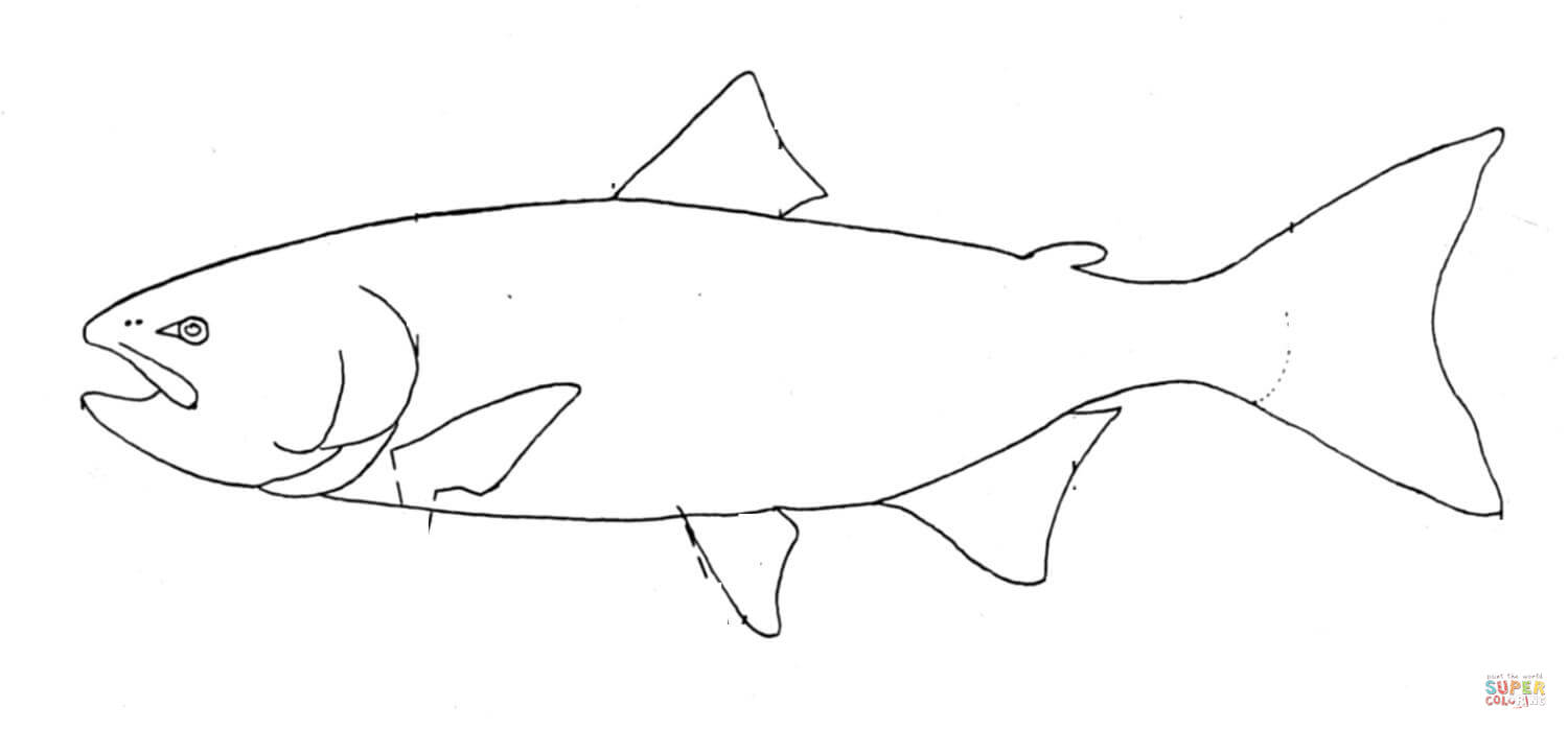 Pacific salmon coloring pages download