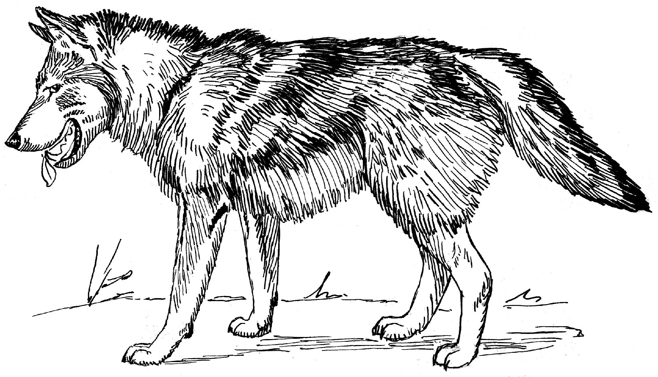 wolf coloring pages to download and print for free