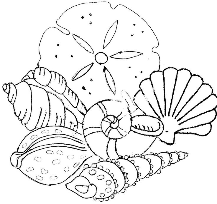 coloring pages of seashells | Beach shells coloring pages download and print for free