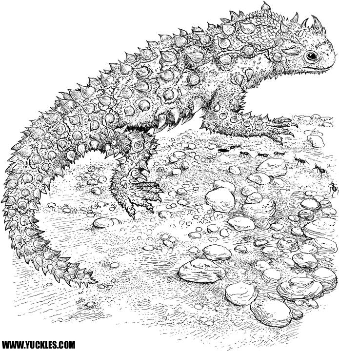 lizard and snake coloring pages - photo#33
