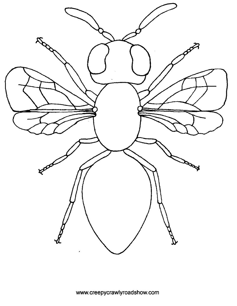 insect coloring pages to download and print for free - Rainforest Insects Coloring Pages