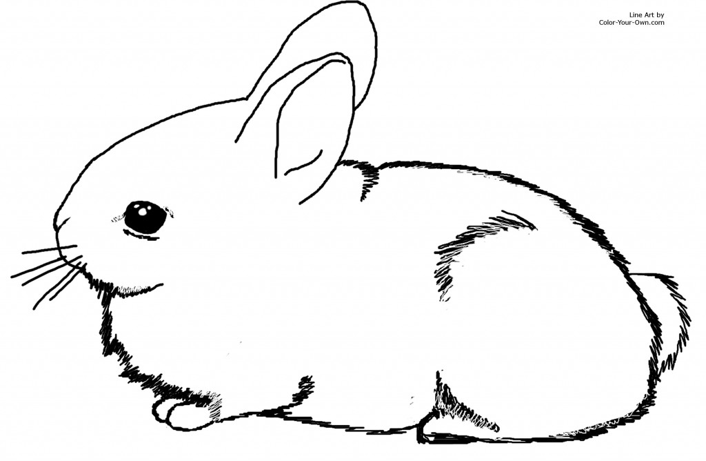 This is a photo of Selective Bunny Coloring Pages Printable
