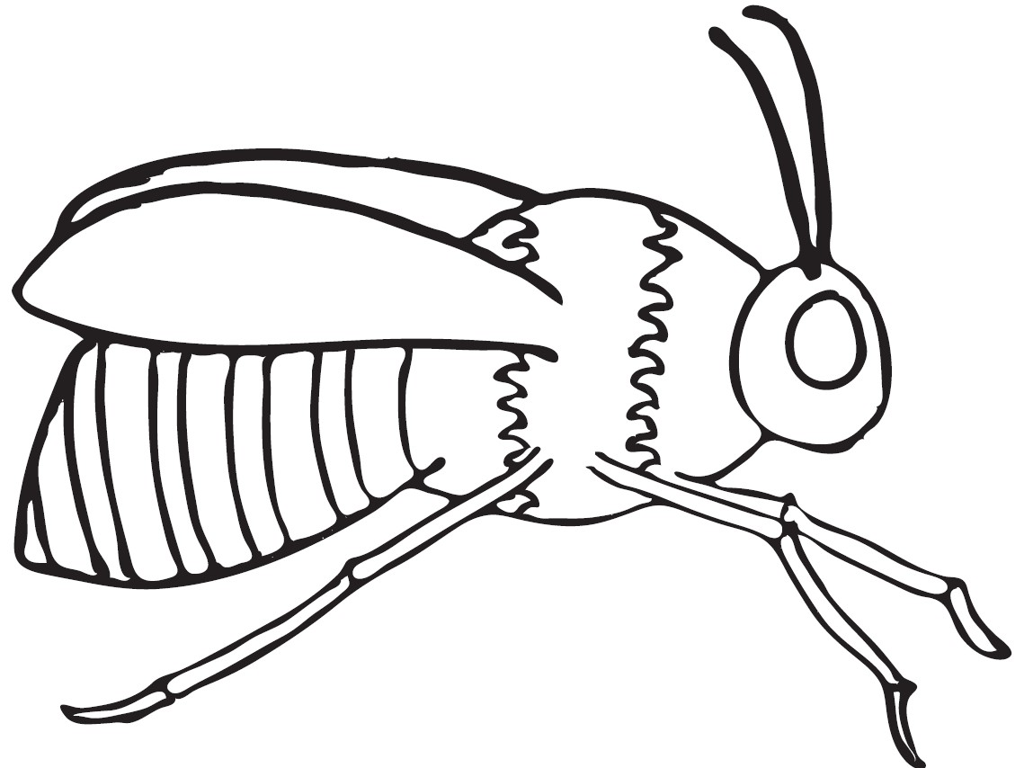 Bee Coloring Pages To Download And Print For Free