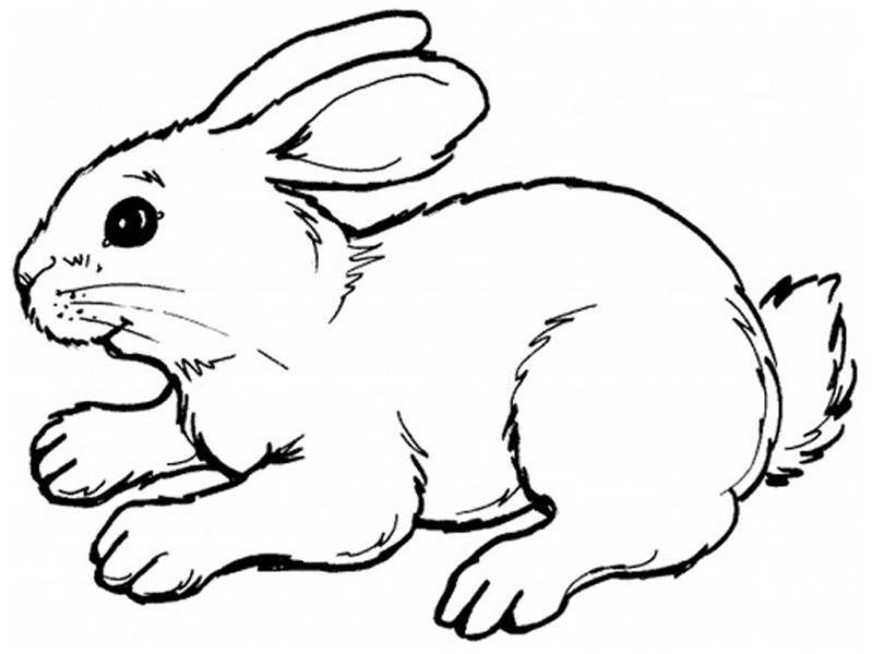 realistic baby bunny coloring pages - photo#9