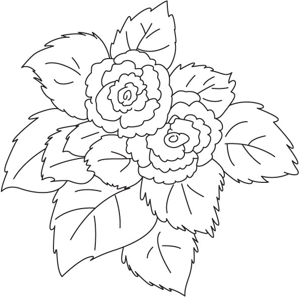 Begonia coloring pages to download