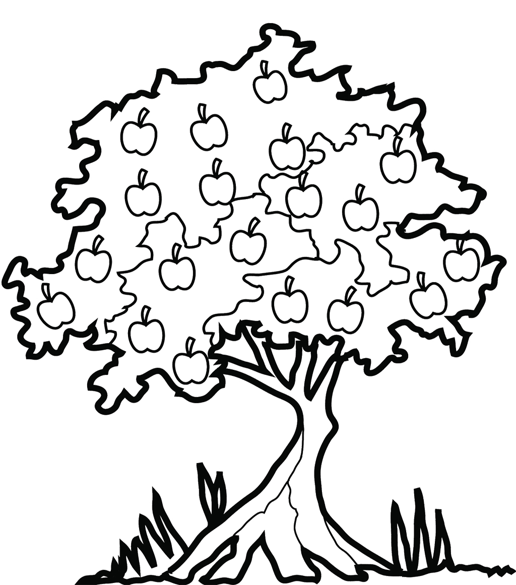 Apple Tree Coloring Pages Simple Flat Flat Stanley Coloring