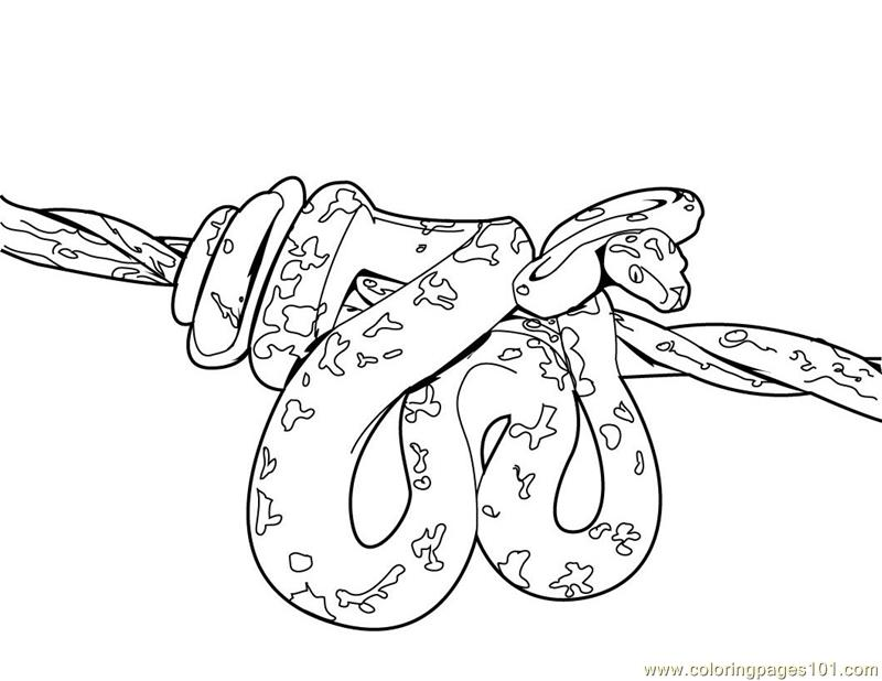 free printable cobra coloring pages - photo#8