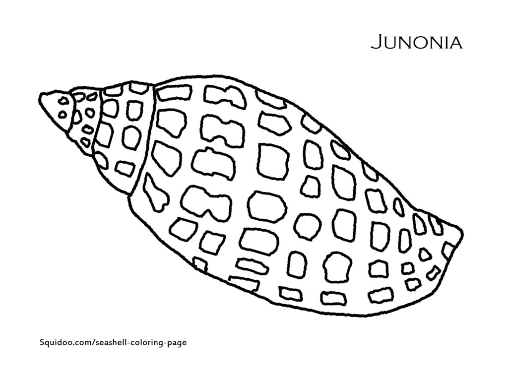 Shell coloring pages to download