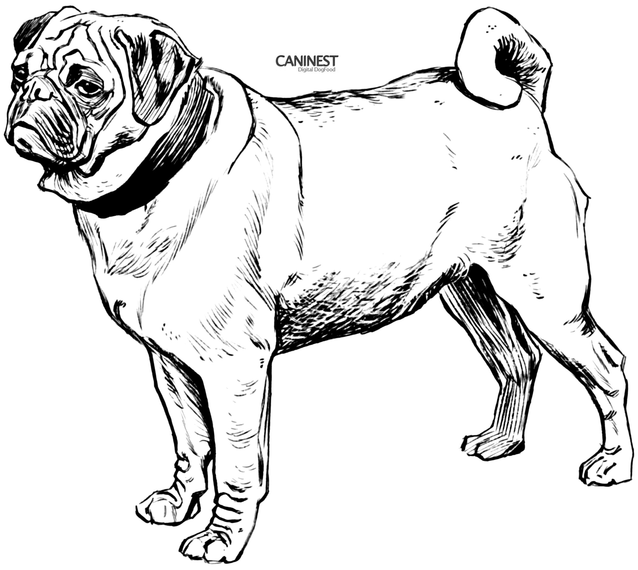 pug coloring pages to download and print for free