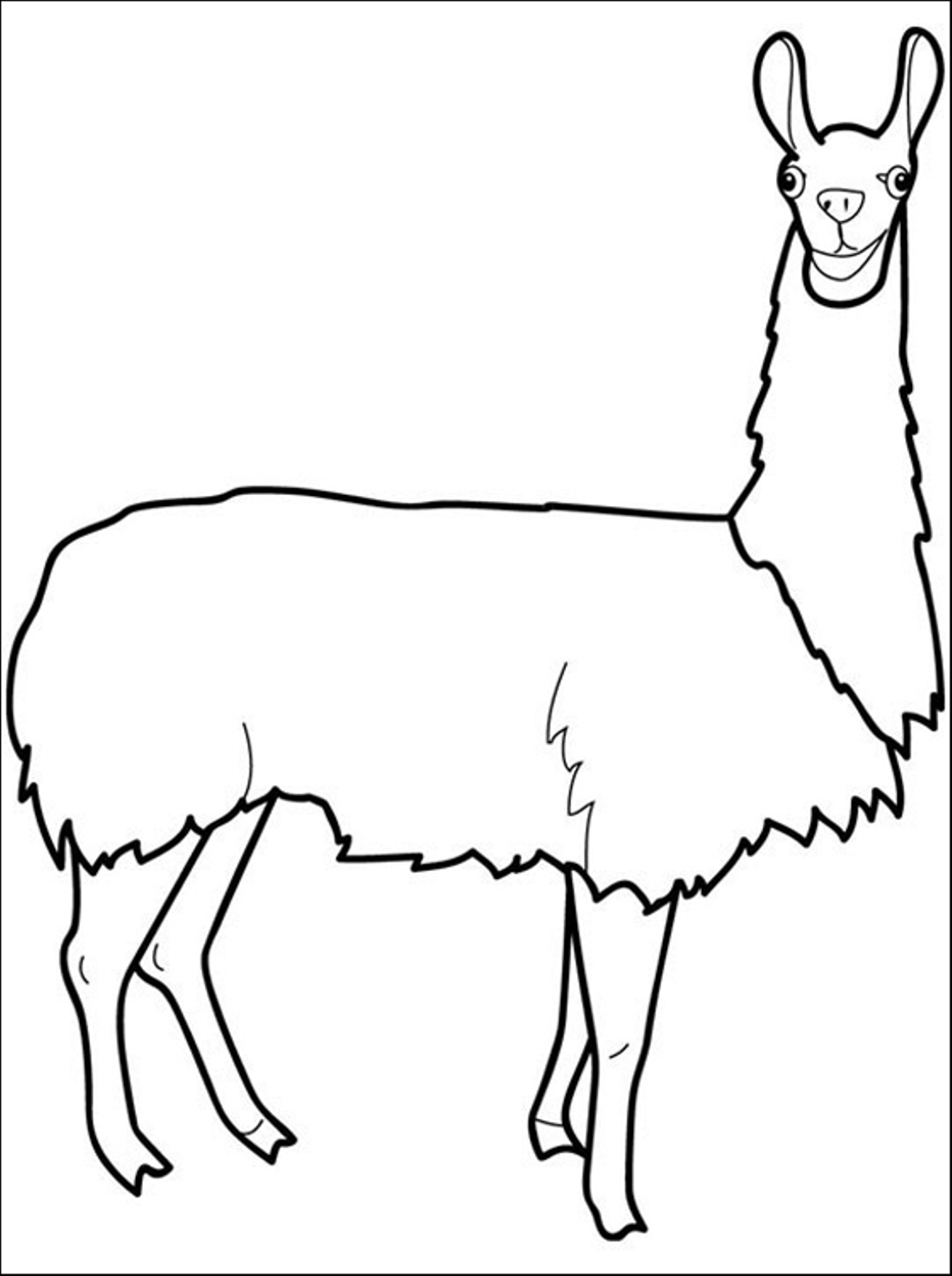 Llama coloring pages to download