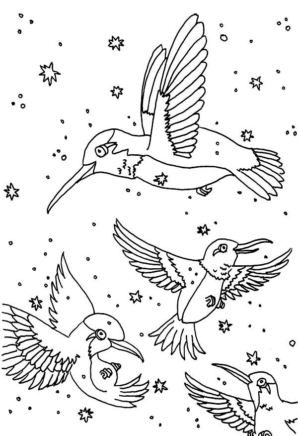 Philippines Animals Coloring Page Hummingbird Pages To Download And Print For Free