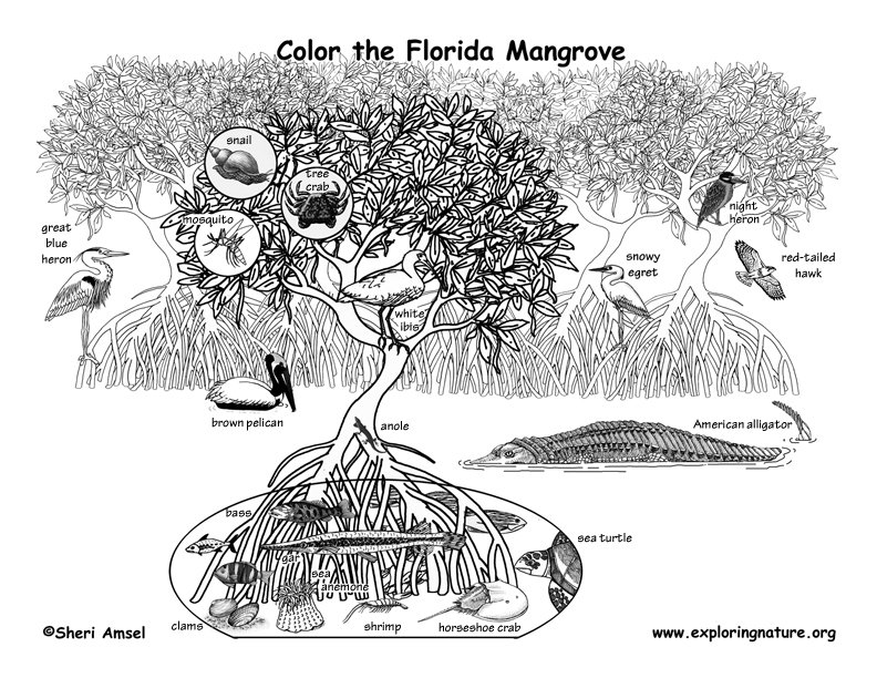 florida animals coloring pages - photo#11
