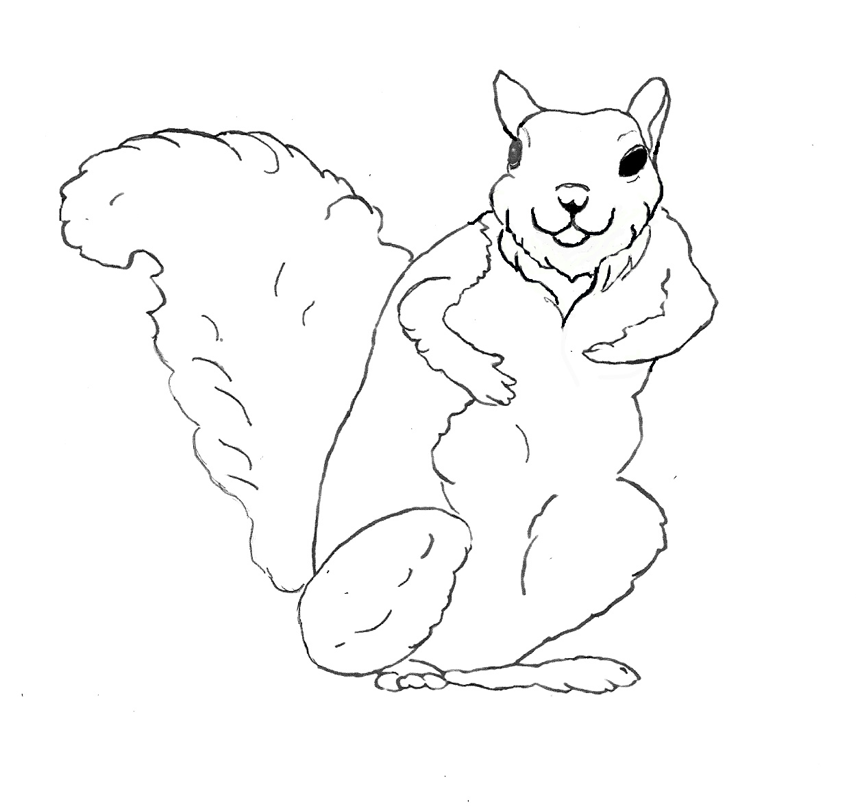 free coloring pages for squrrils - photo#3
