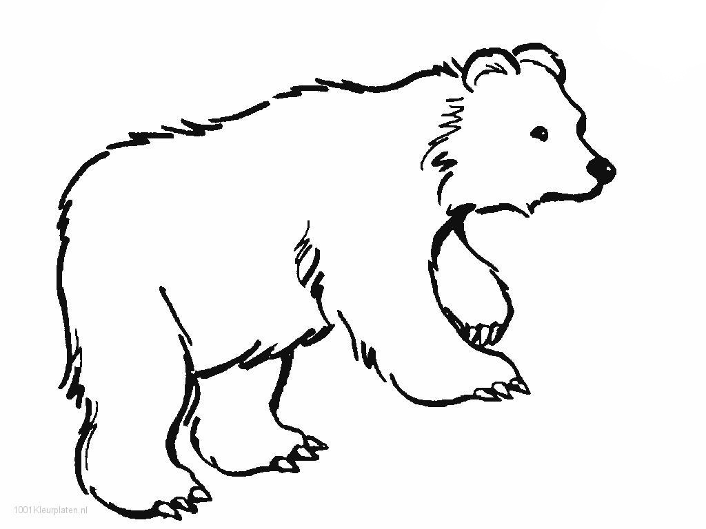 Polar animals coloring pages for kids - Brown Bear Coloring Pages