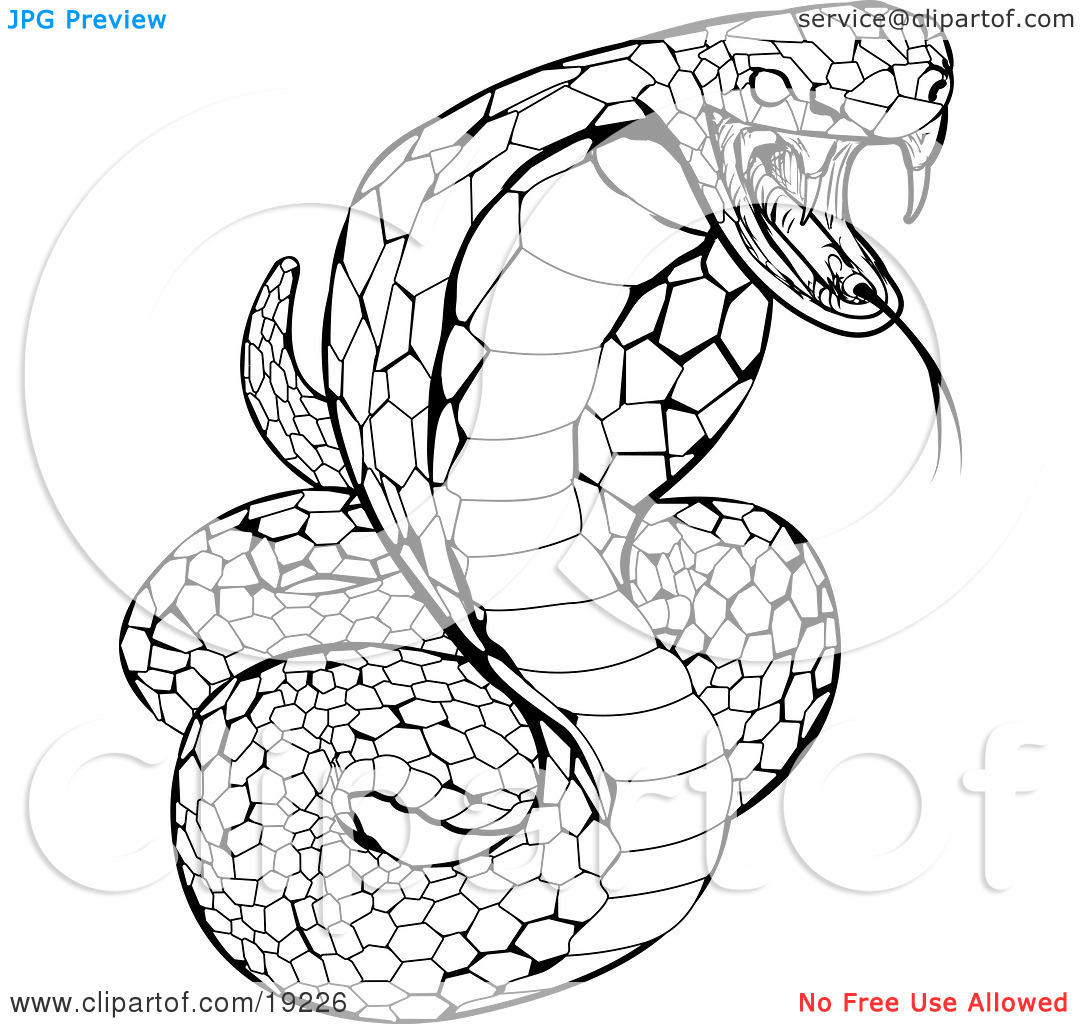 It's just a photo of Declarative cobra coloring pages