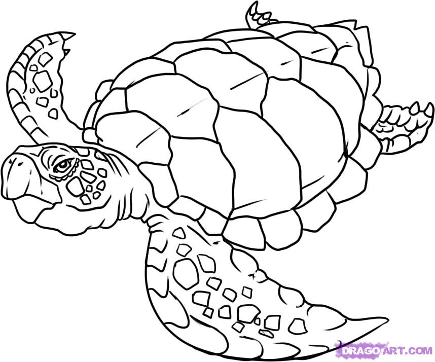sea turtle coloring pages to download and print for free. Black Bedroom Furniture Sets. Home Design Ideas