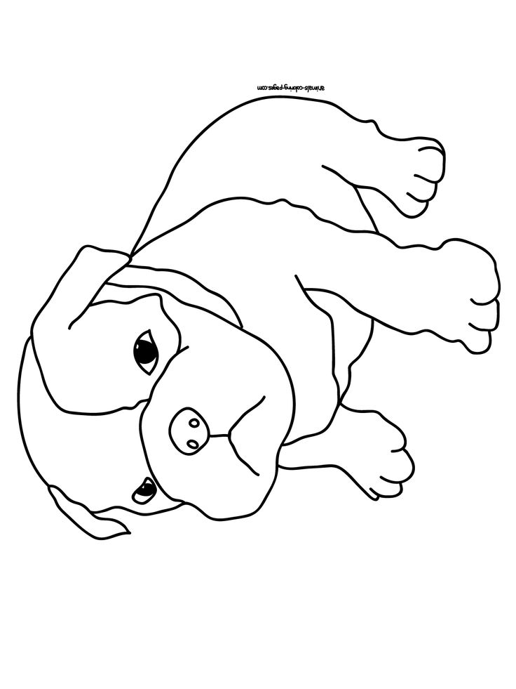 Pug coloring pages to download