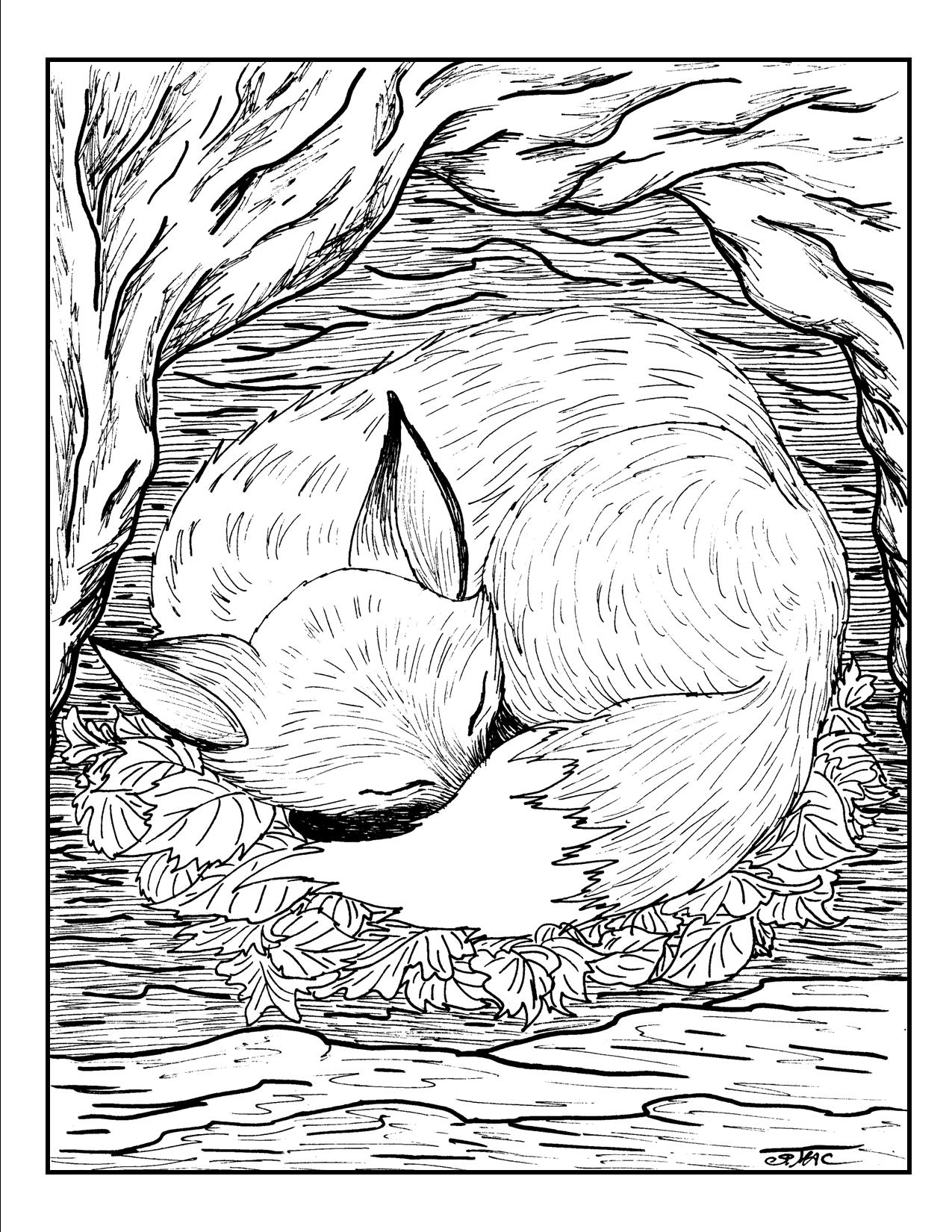 Intricate Coloring Pages Adults Printables Coloring