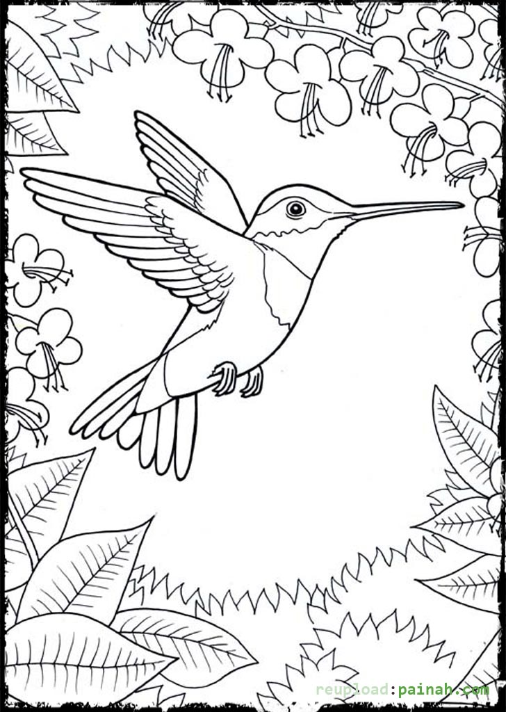 Hummingbird coloring pages to download and print for free for Coloring pages birds