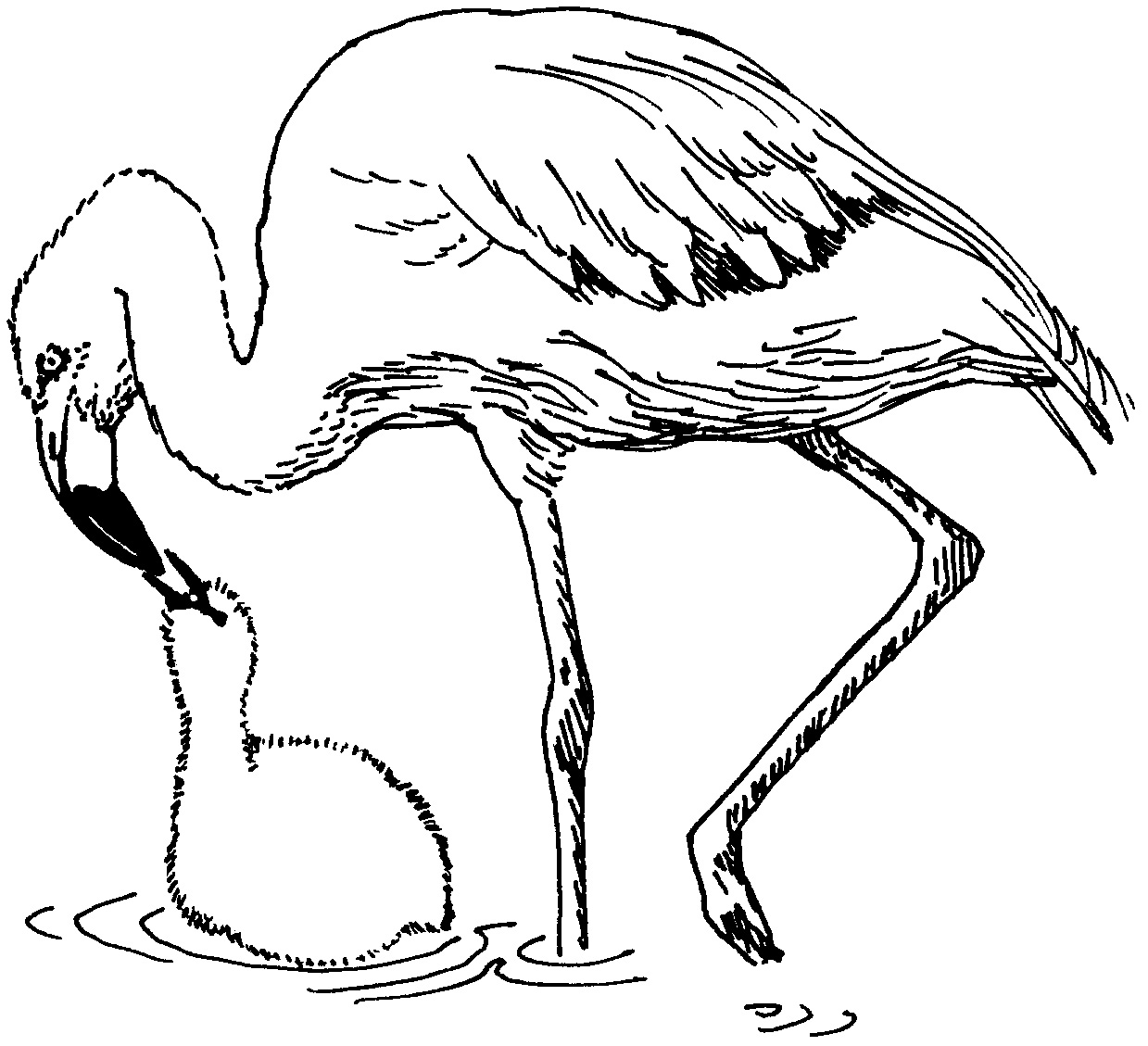 Flamingo coloring pages to download