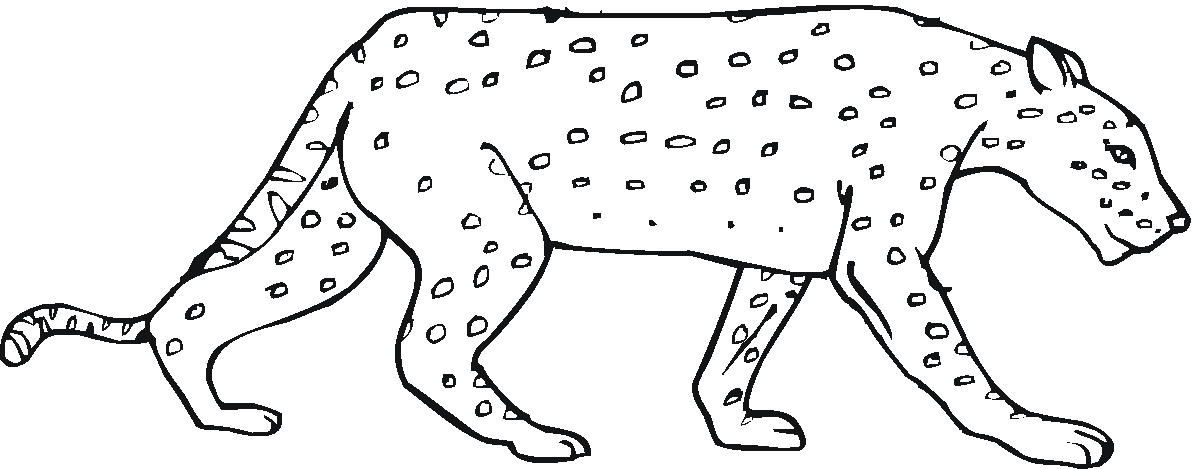 Cheetah Sitting coloring page - Free Printable Coloring Pages ... | 469x1200