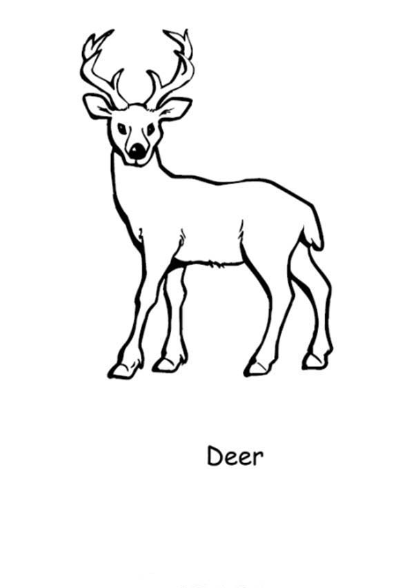 Red deer coloring pages download