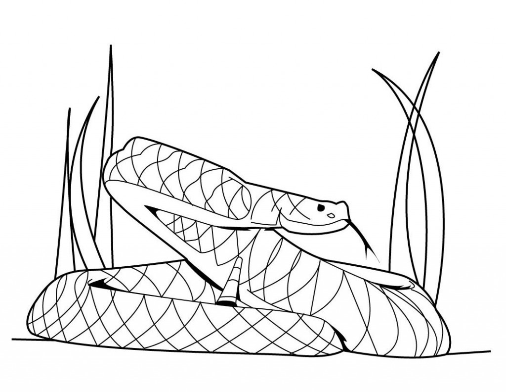 Snake coloring pages to download