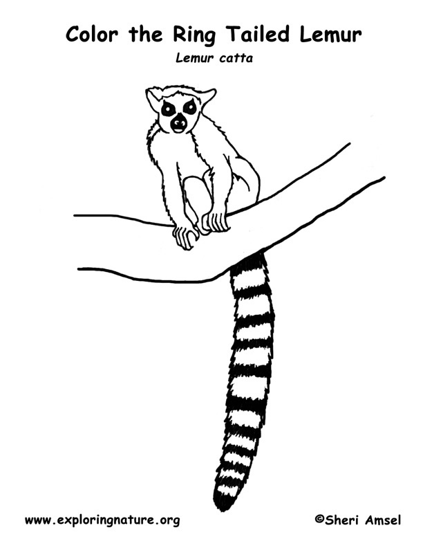 Lemur coloring pages download and